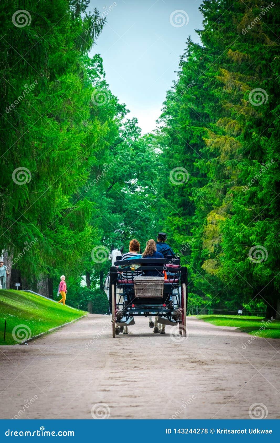 Hästvagnen att gå parkerar igenom på Catherine Palace i St Petersburg, Ryssland