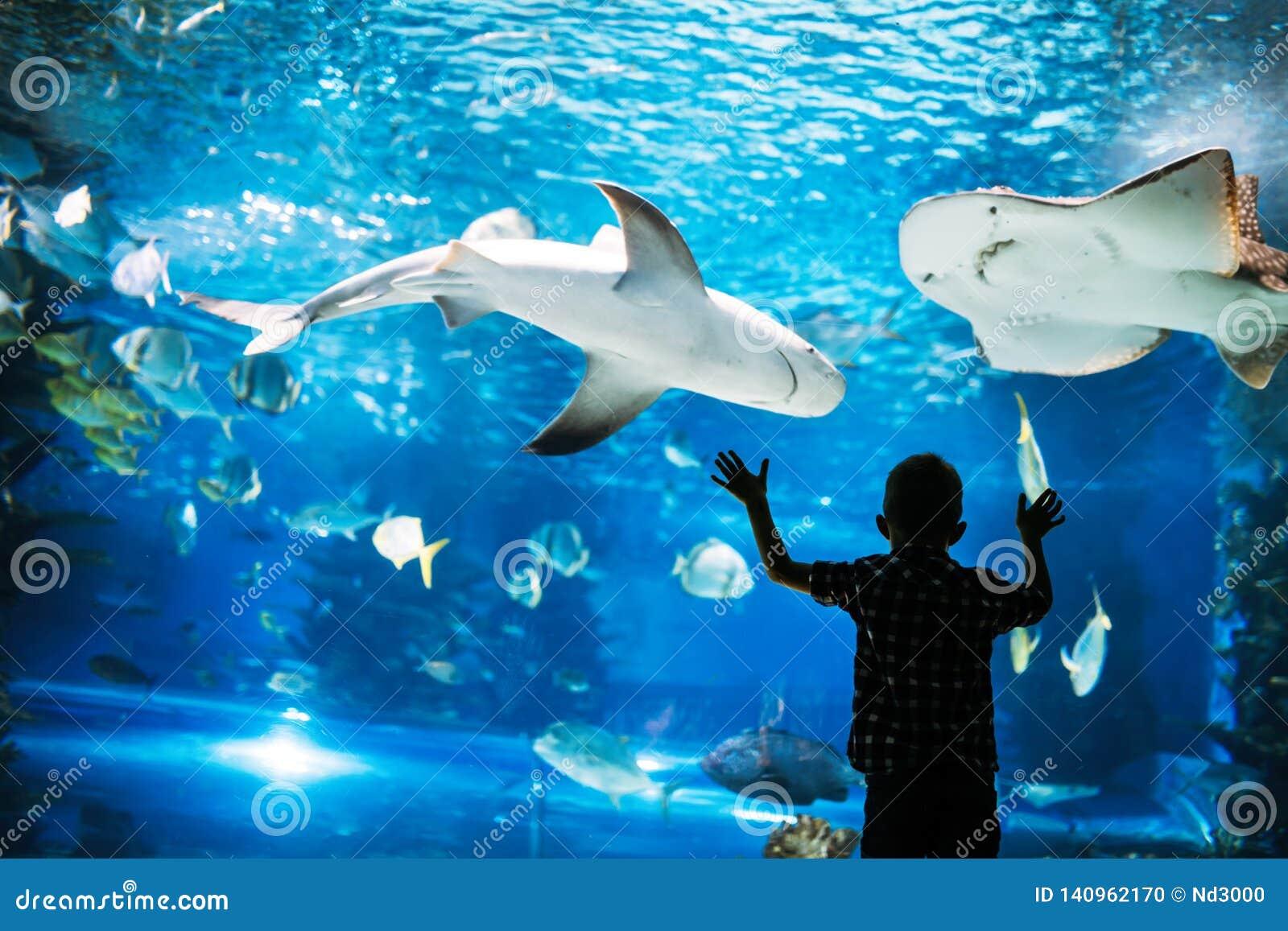 Hållande ögonen på fiskar för pys i akvarium