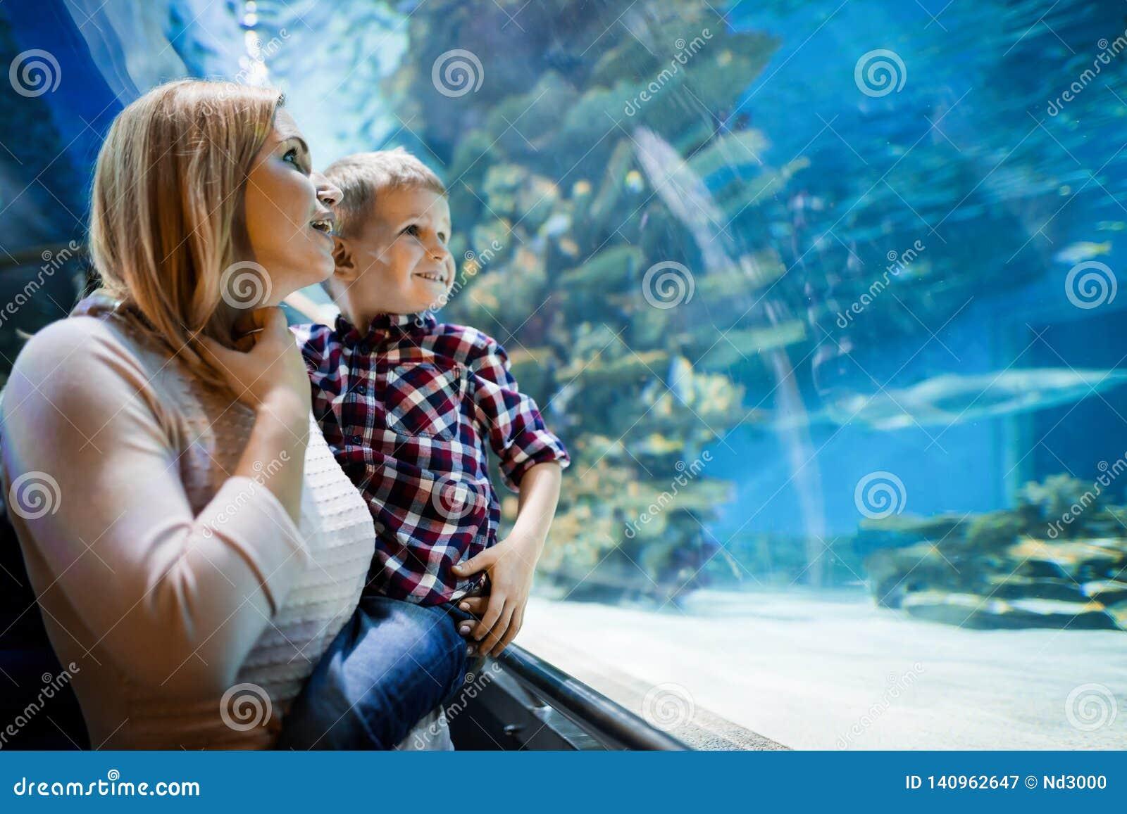 Hållande ögonen på havsliv för moder och för son i oceanarium
