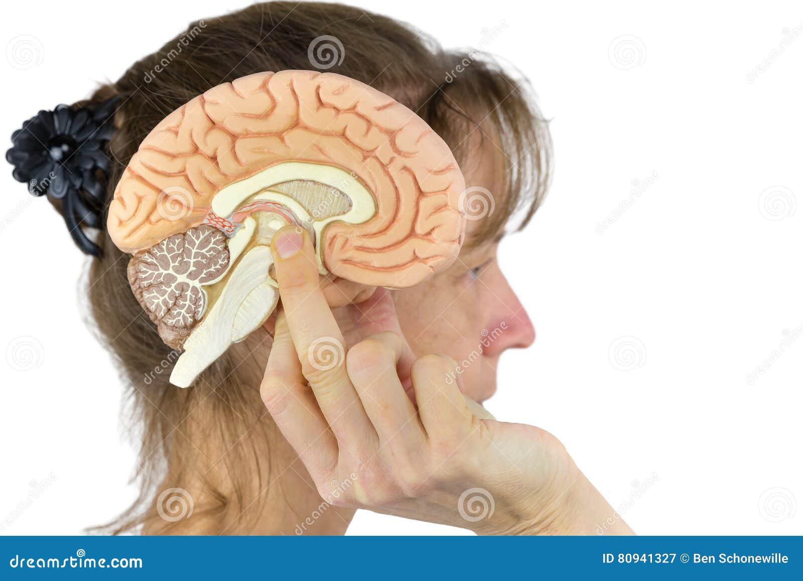 Hållande halvklotmodell för kvinna mot huvudet på vit