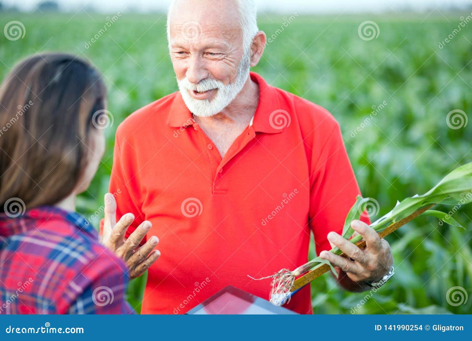 Hög agronom som talar till hans unga kvinnliga kollega i ett havrefält