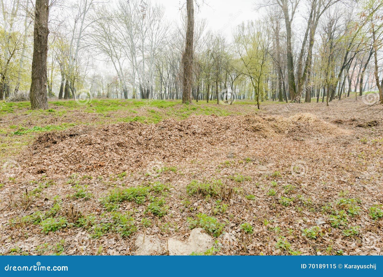 Hög av krossade trädfilialer och sidor