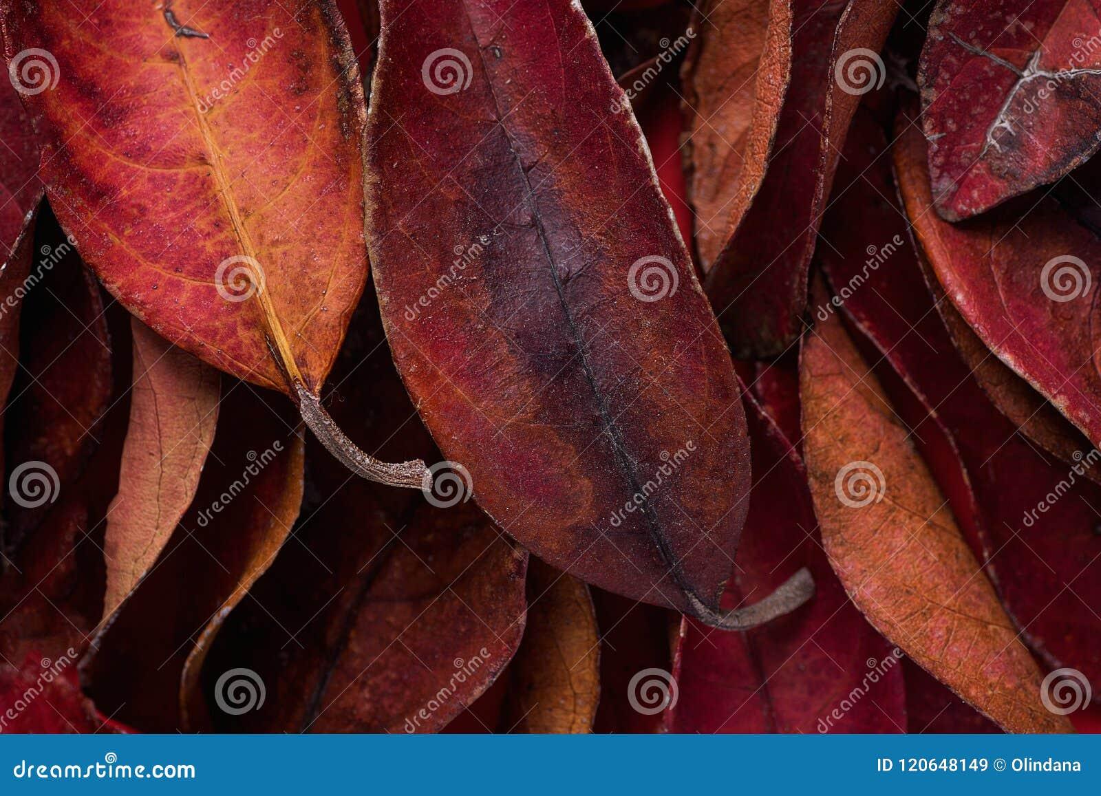 Hög av mörker - röda sidor Rich Vibrant Vivid Crimson Color Valentin för tacksägelsenedgångmode Kort för baneraffischhälsning