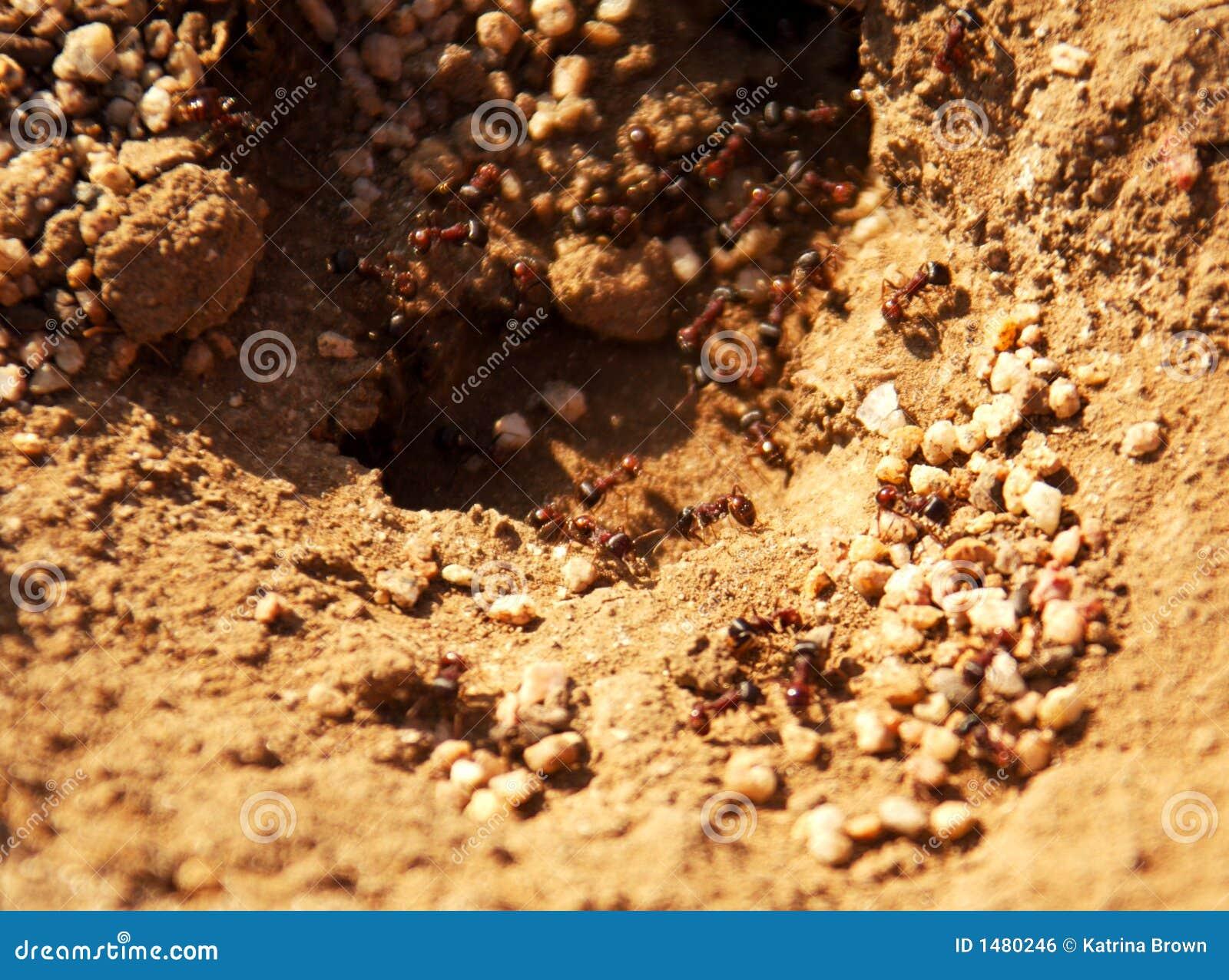 Hög kull för myradof