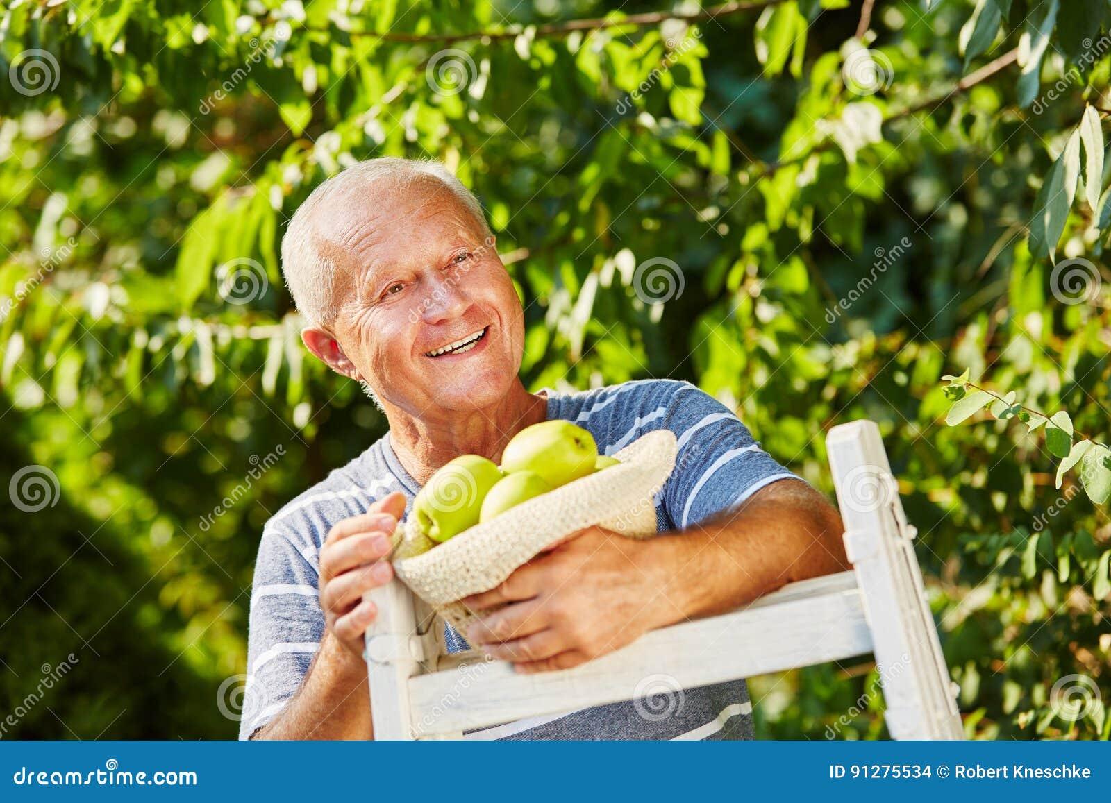 Hög man som behas med äppleskörden