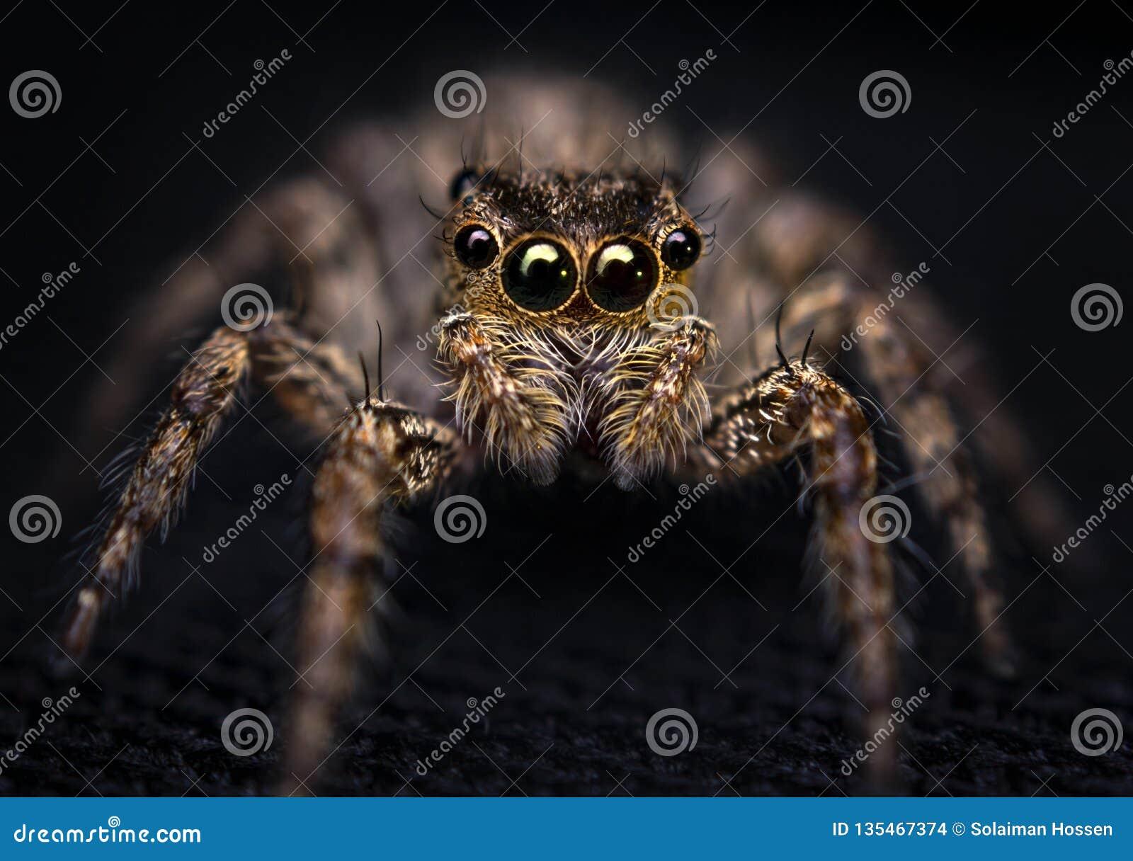 Hög spindel för foto för banhoppningmakroförstoring