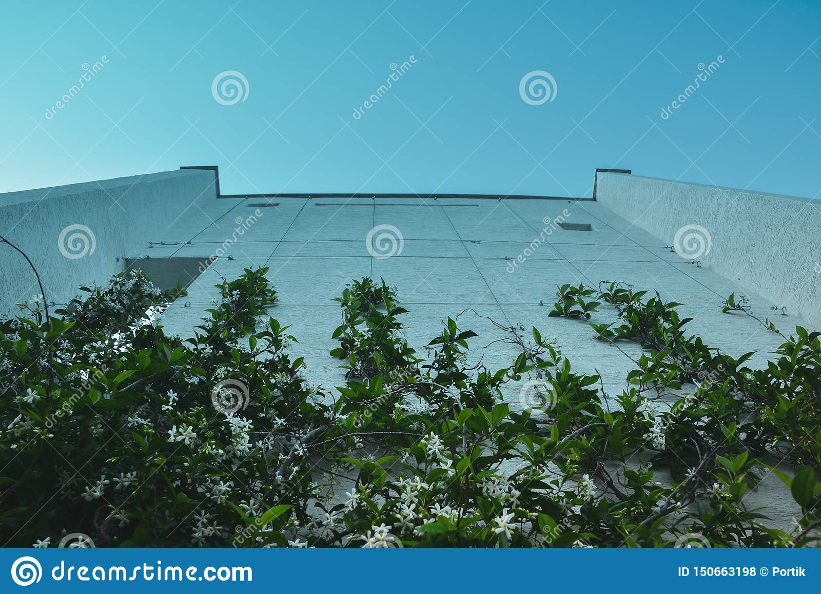 Hög vägg med klättringväxter mot den blåa himlen
