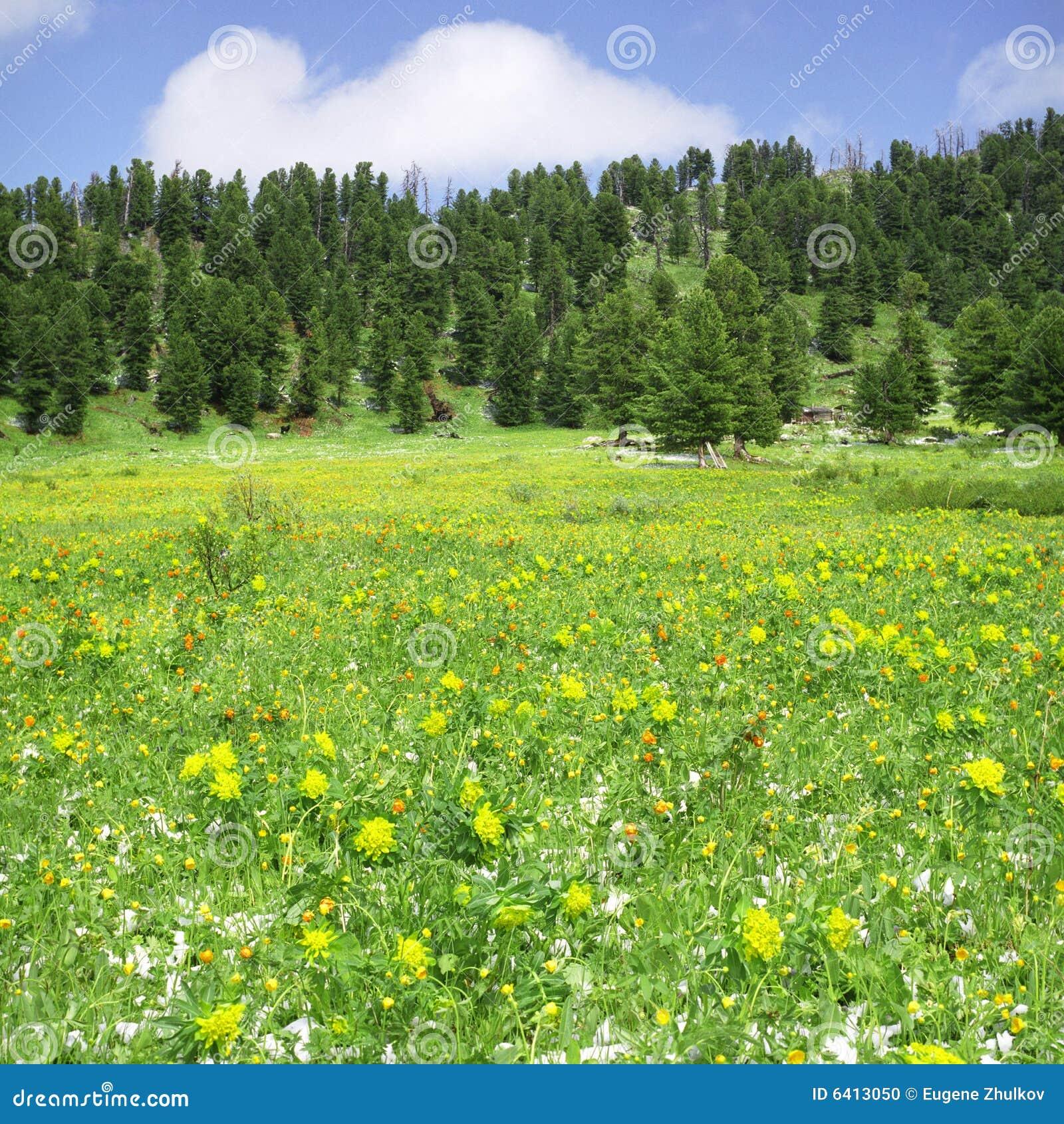 Höga berg för blommor