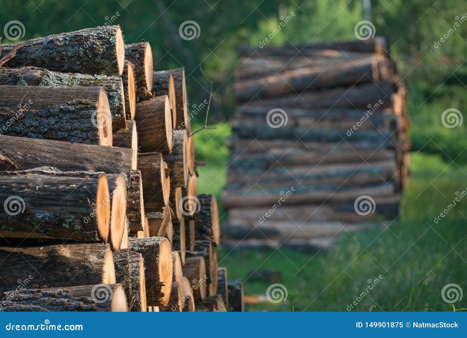 Högar av staplade loggade träd från regulatorn Knowles State Forest i nordliga Wisconsin - DNR har arbetande skogar som är harves