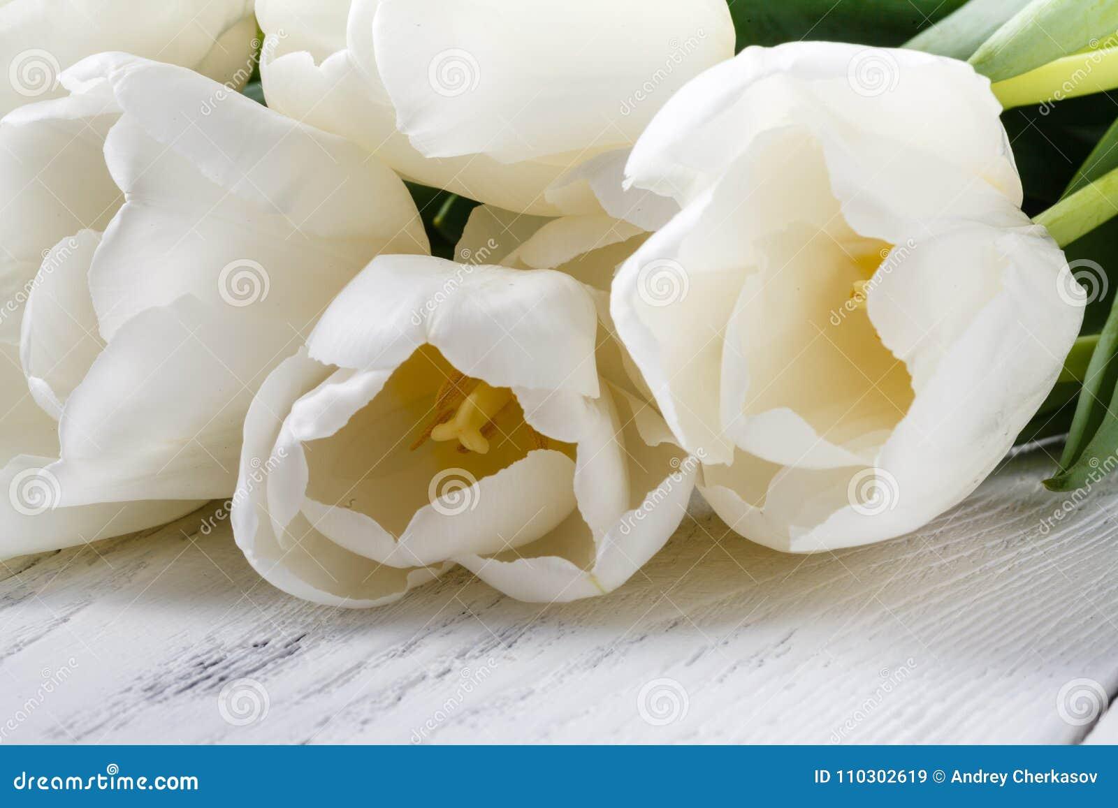 Högen av den vita våren blommar tulpan