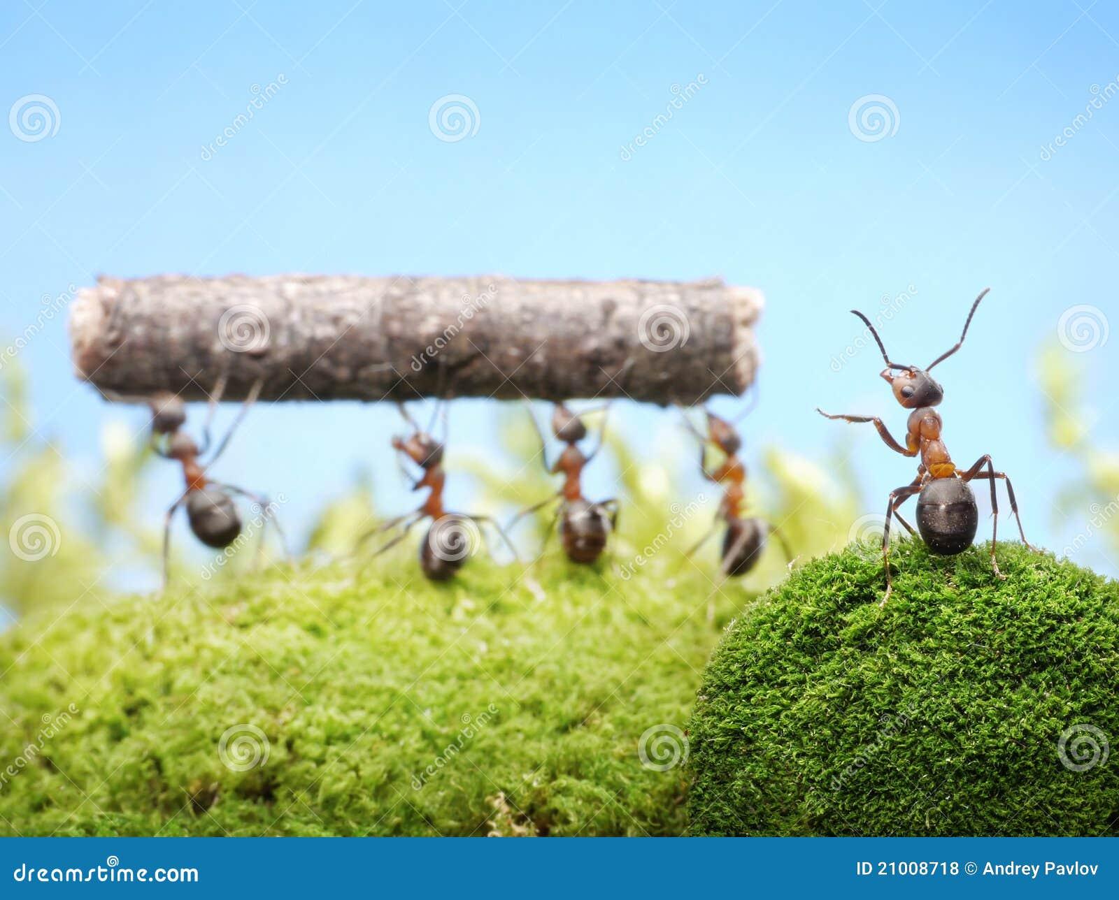 Högsta hanterande teamworkarbete för myror