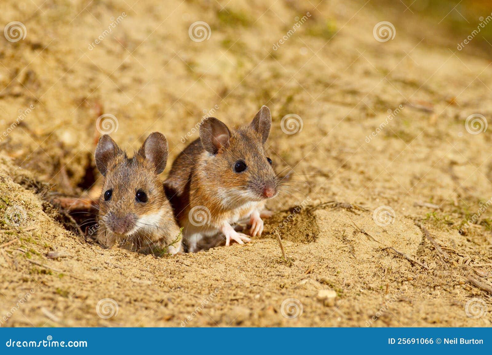 Hölzerne Mäuse