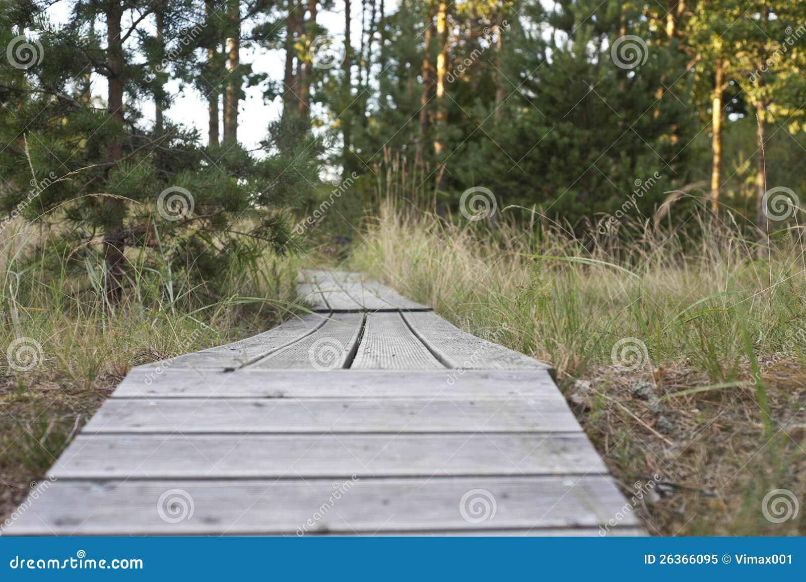Hölzerner Pfad durch Wald