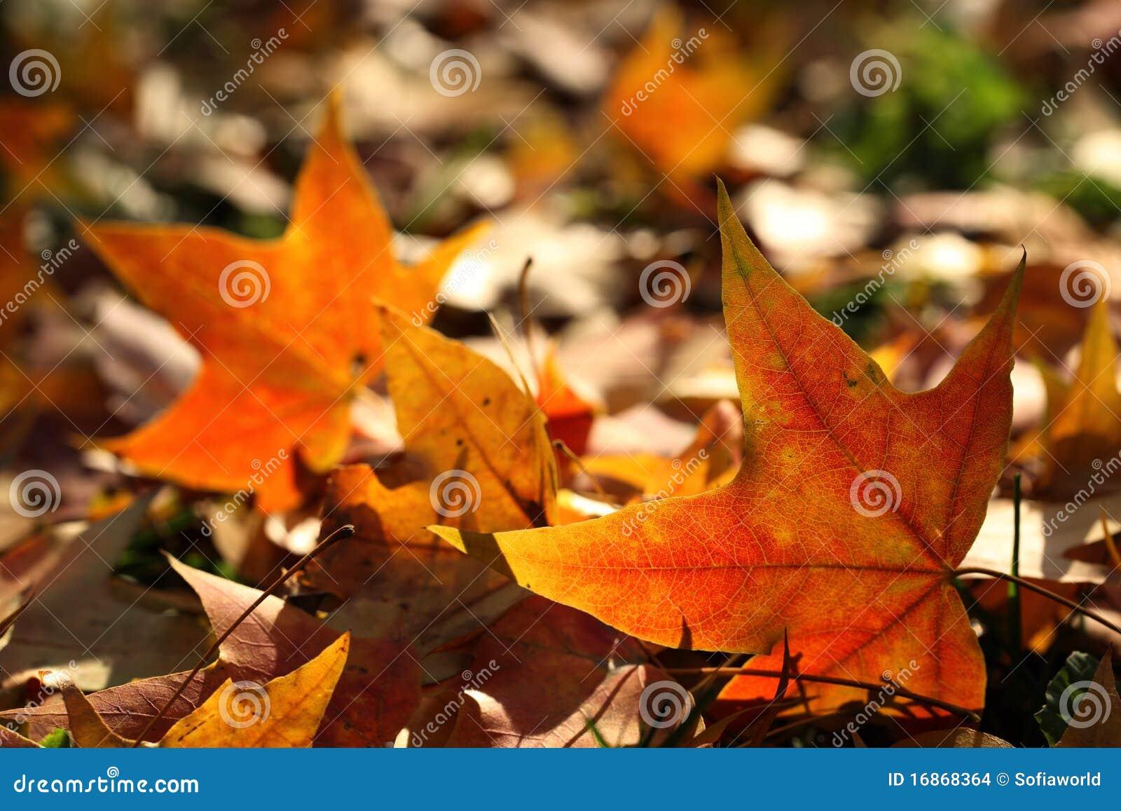 Höst fallna leaves