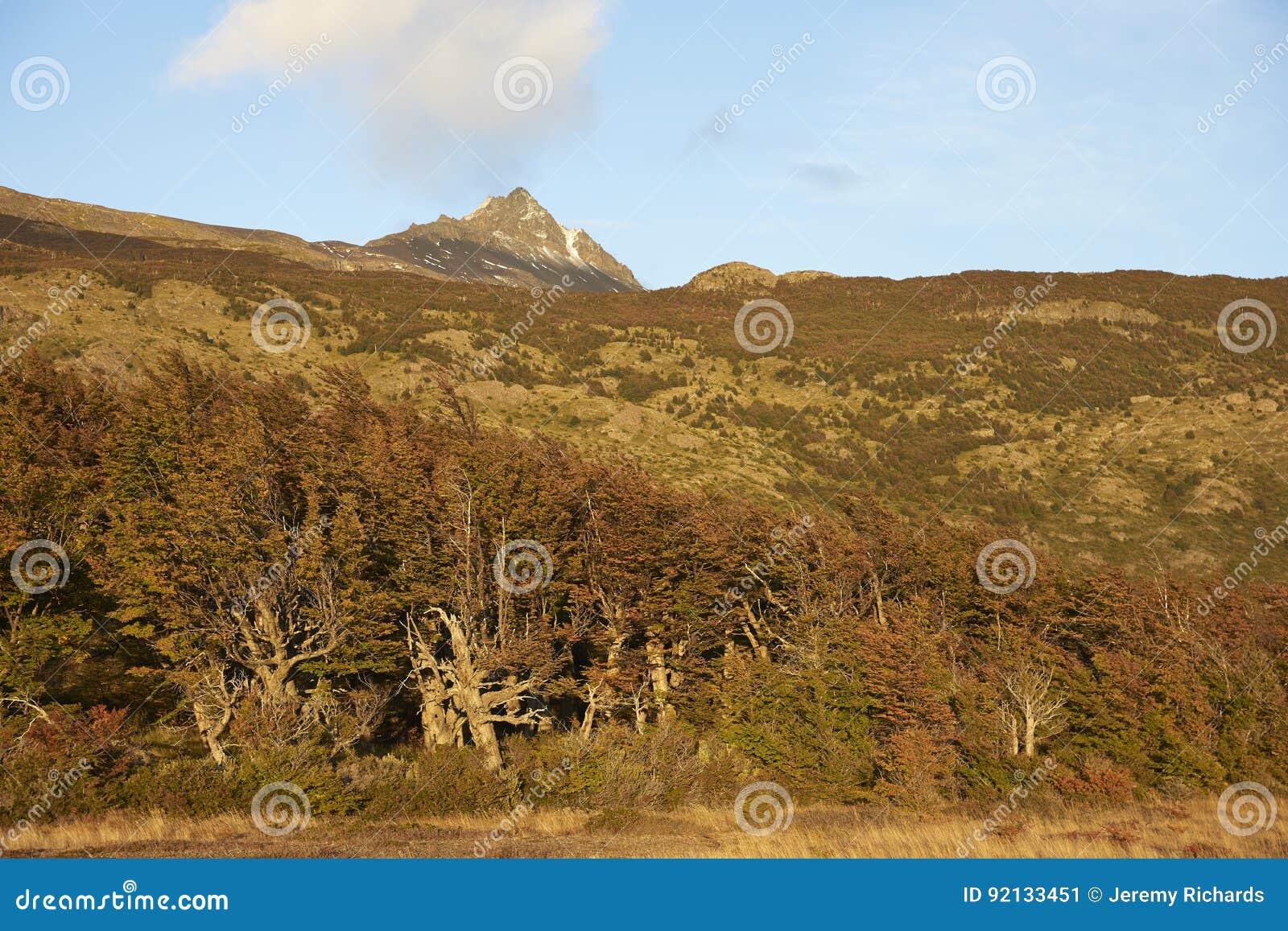 Höst i den Torres del Paine nationalparken, Chile