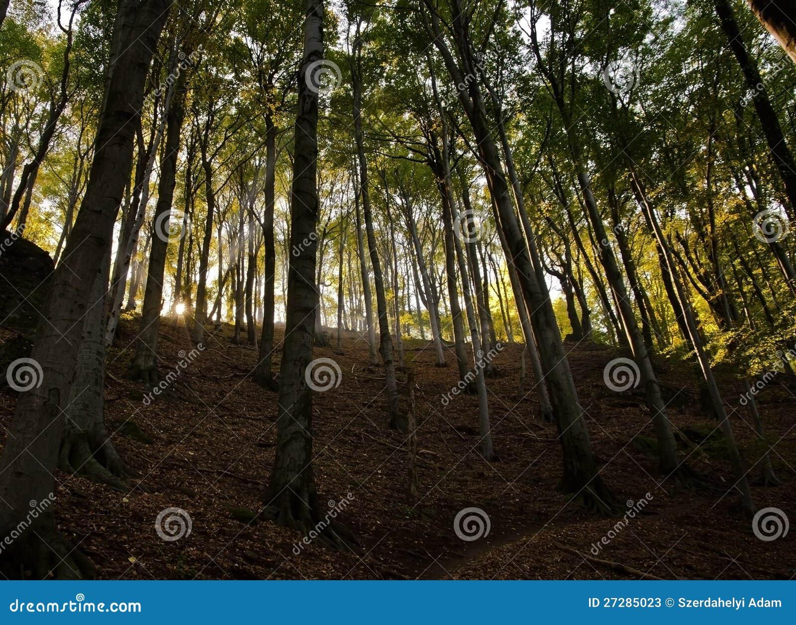Höst i skog