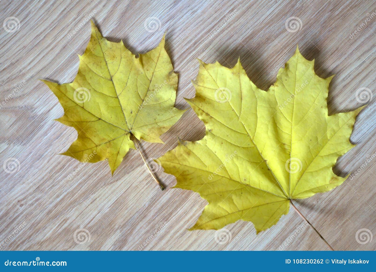 Höst Time Väder Natur Sidor fallet Två sidor tillsammans Guling som är röd, apelsin brigham September Oktober säsong torrt de