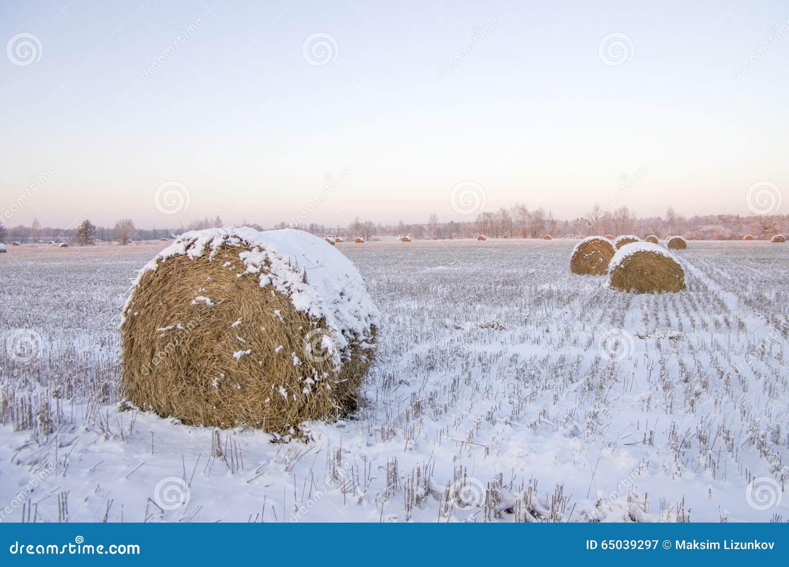 Höstackar på det djupfryst fältet