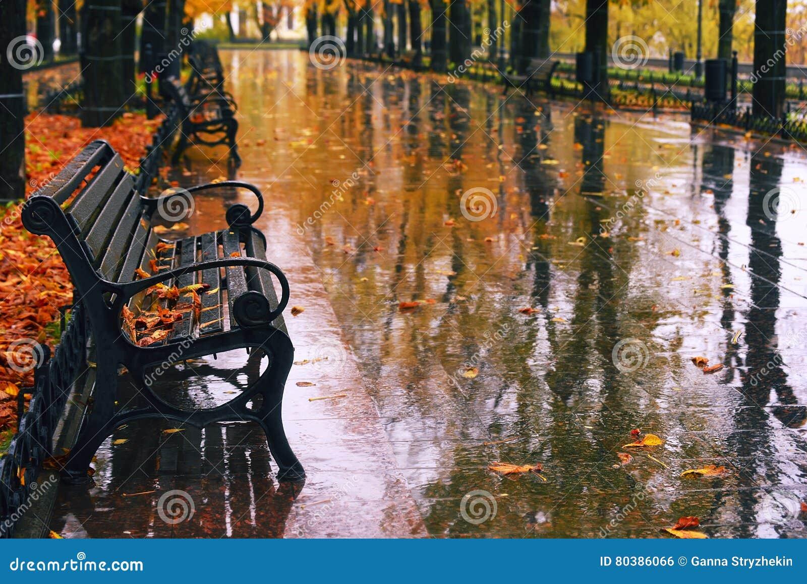 Höstboulevard i regnet