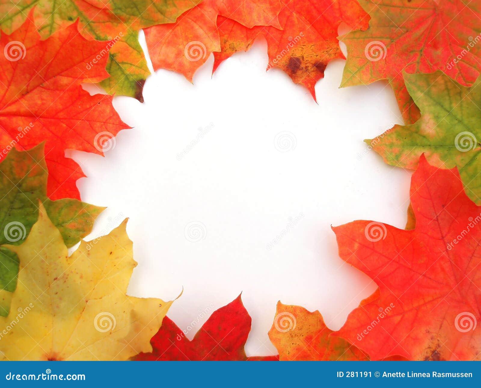 Hösten färgade ramen låter vara lönn