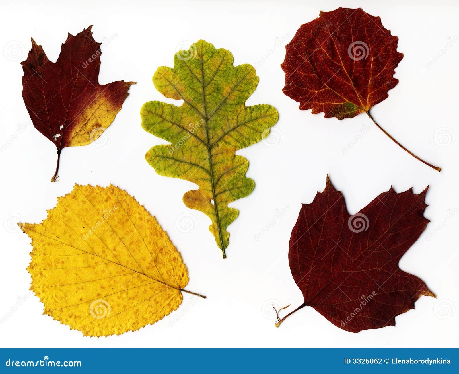 Hösten isolerade leaves