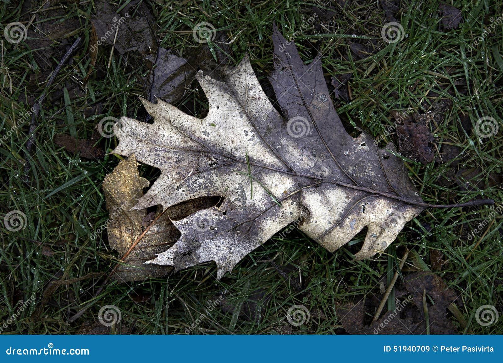 Hösten lämnar