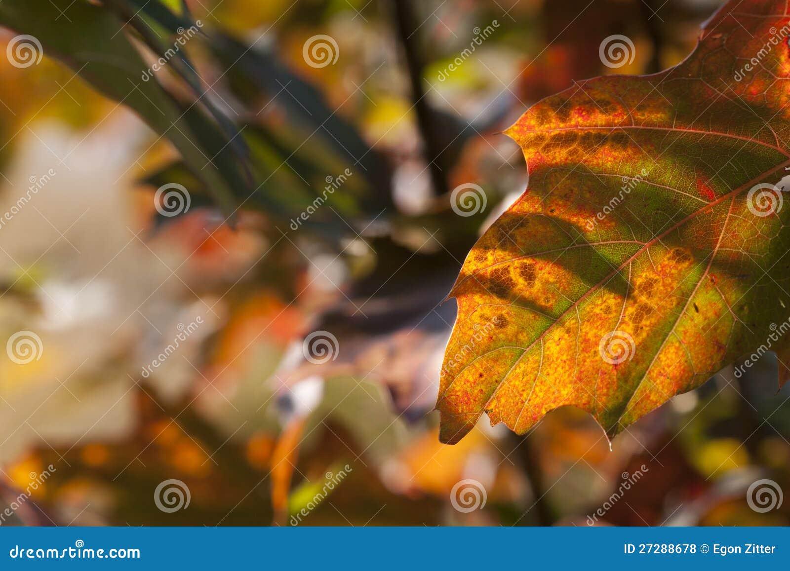 Hösten låter vara bakgrundsleafs
