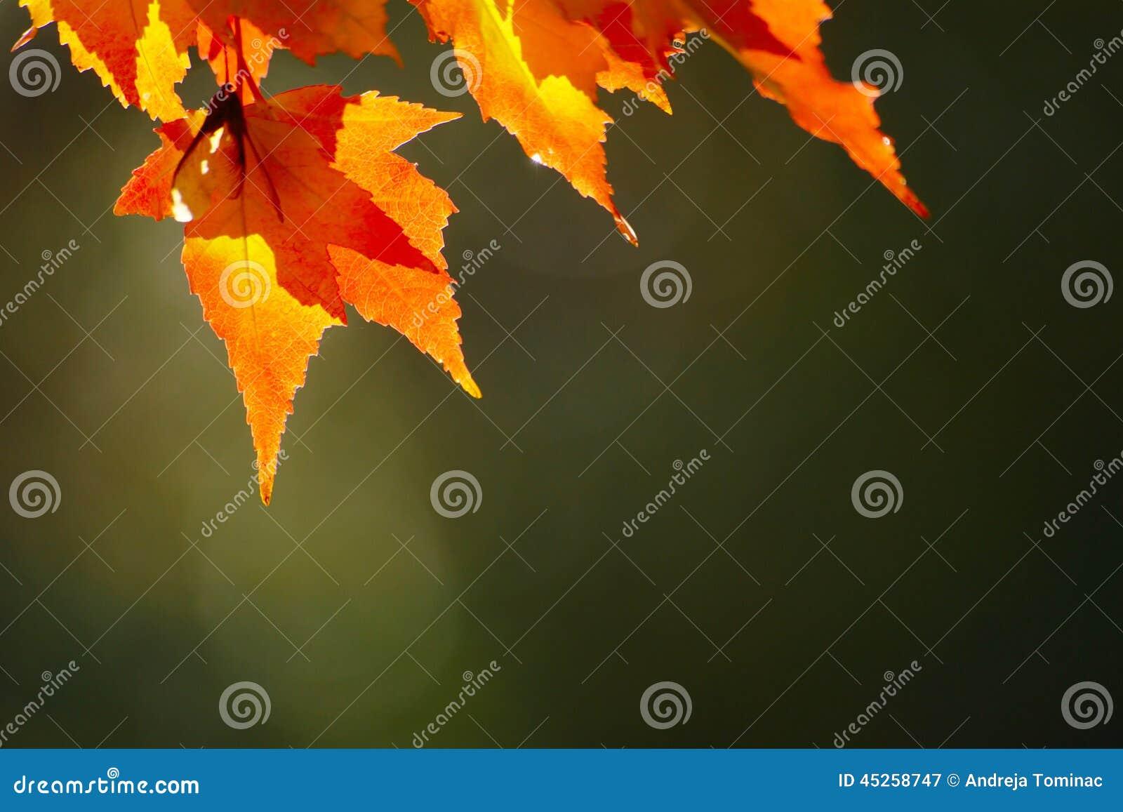 Hösten låter vara red
