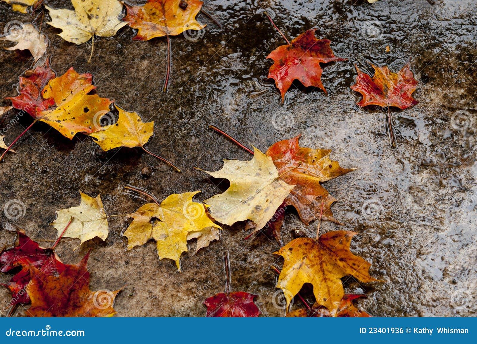 Hösten låter vara trottoar våt