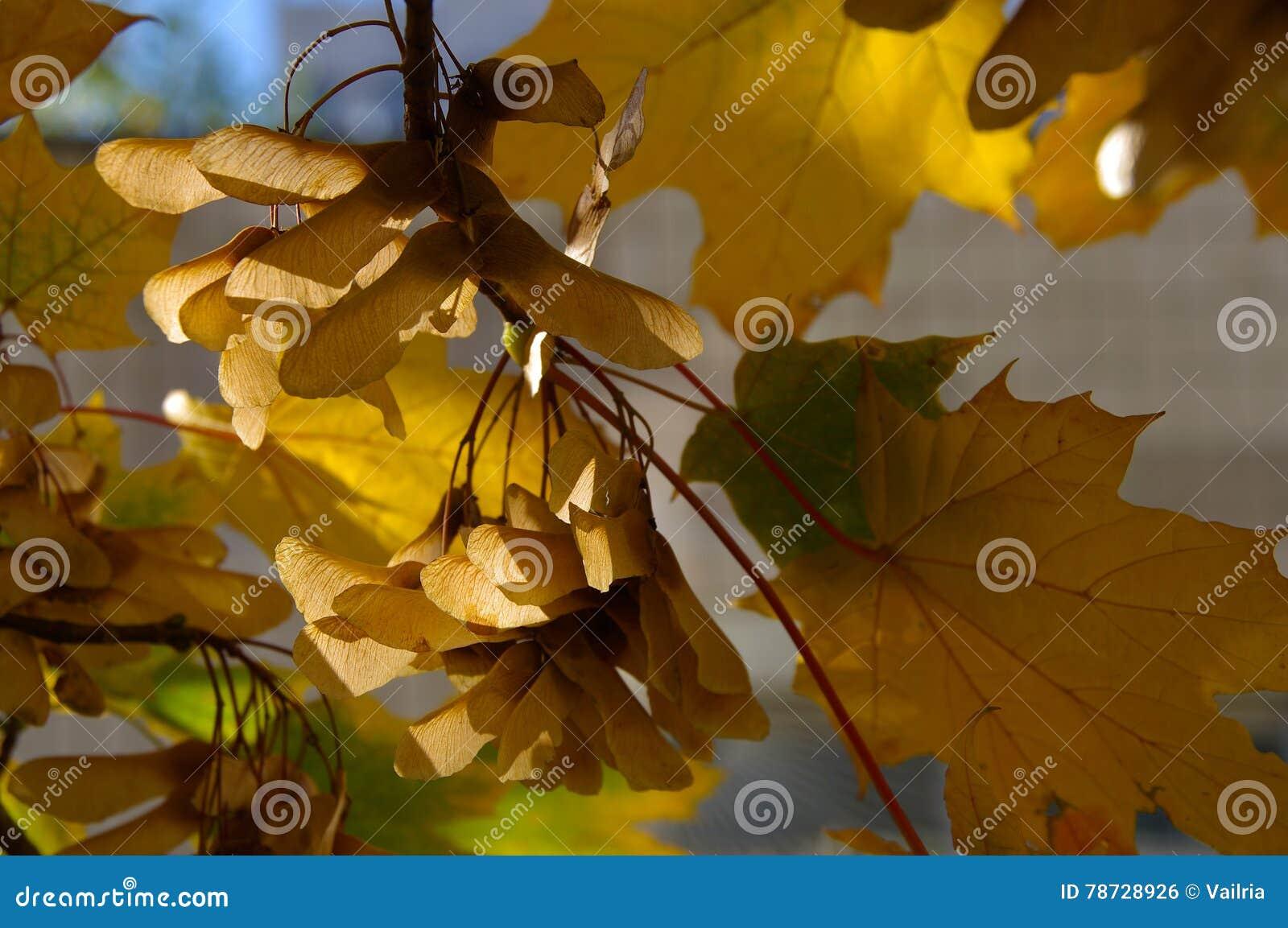 Hösten låter vara yellow