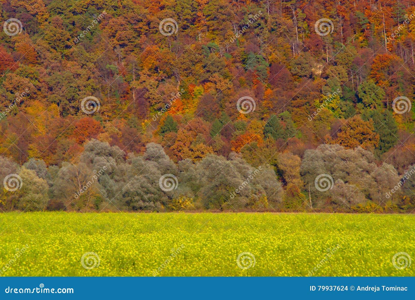 Hösten landskap