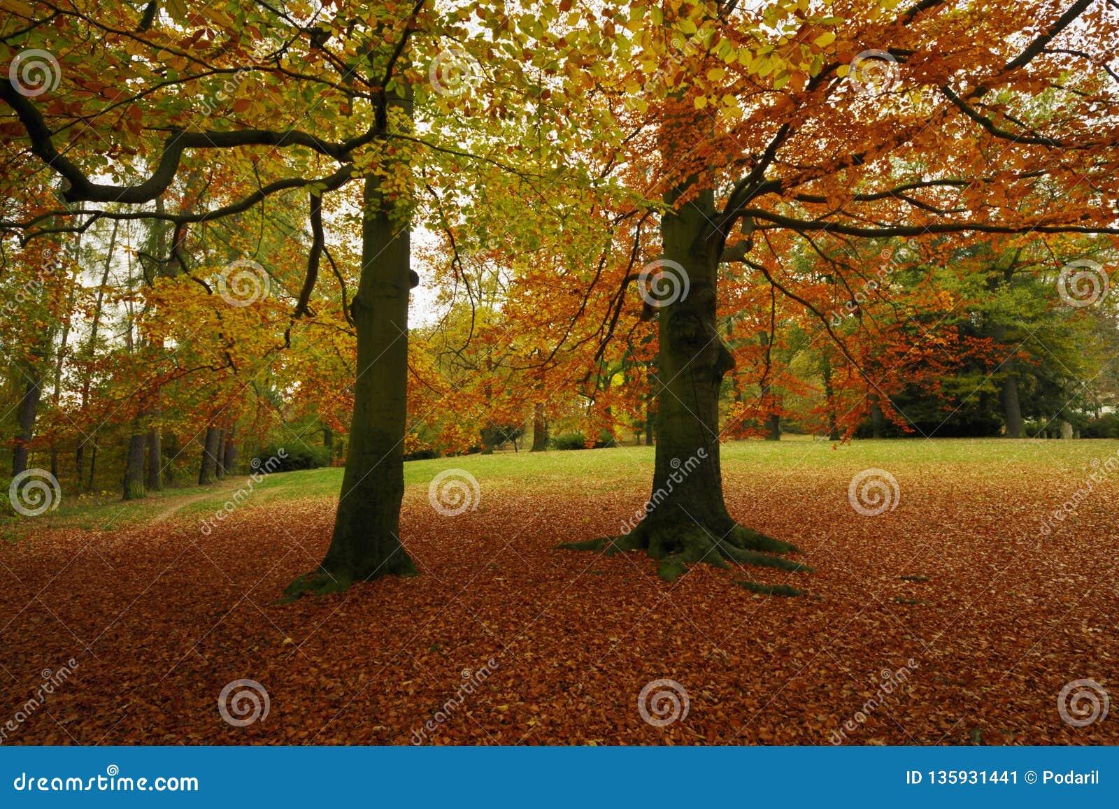 Hösten parkerar med bokträdträd