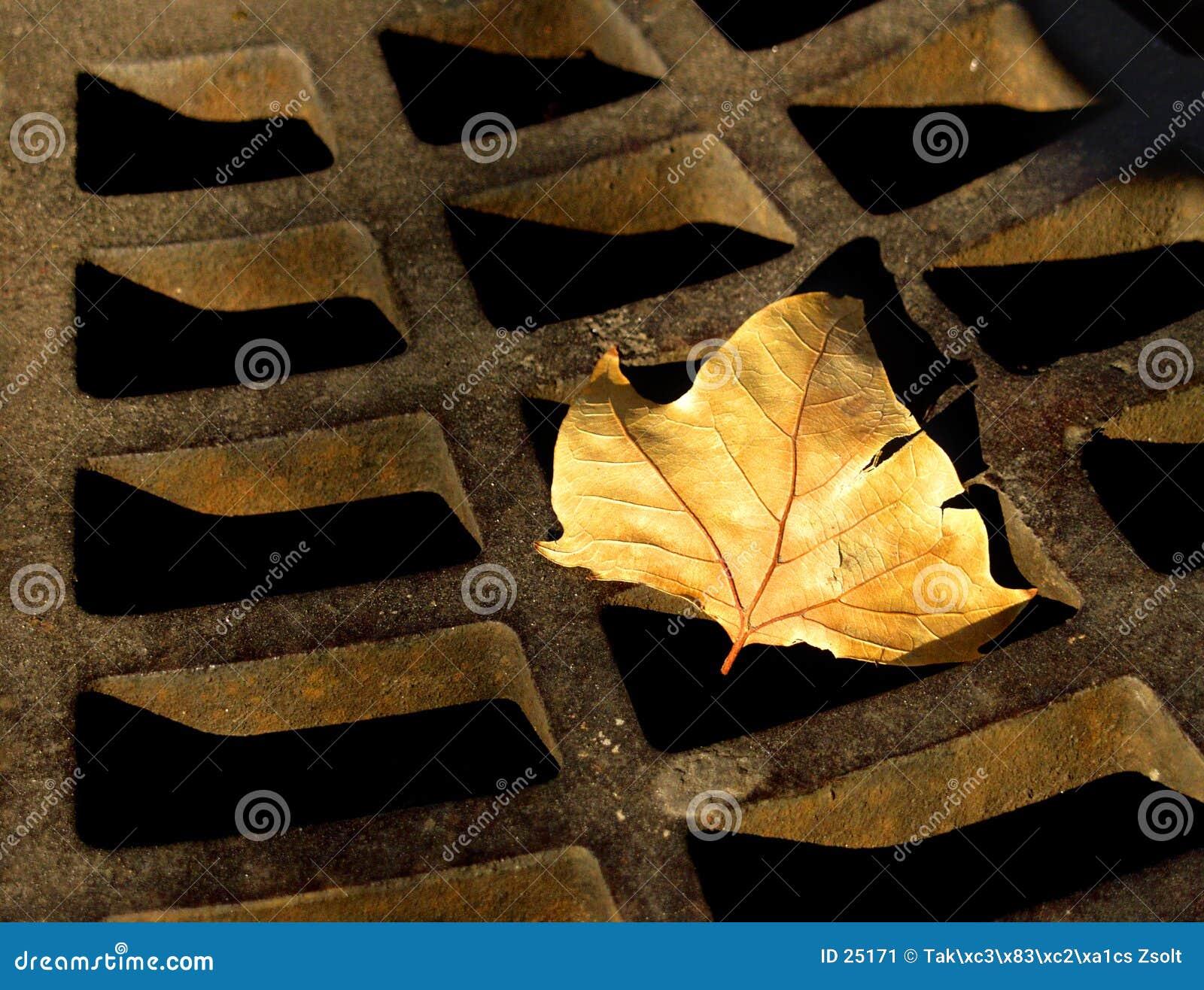 Hösten rostade