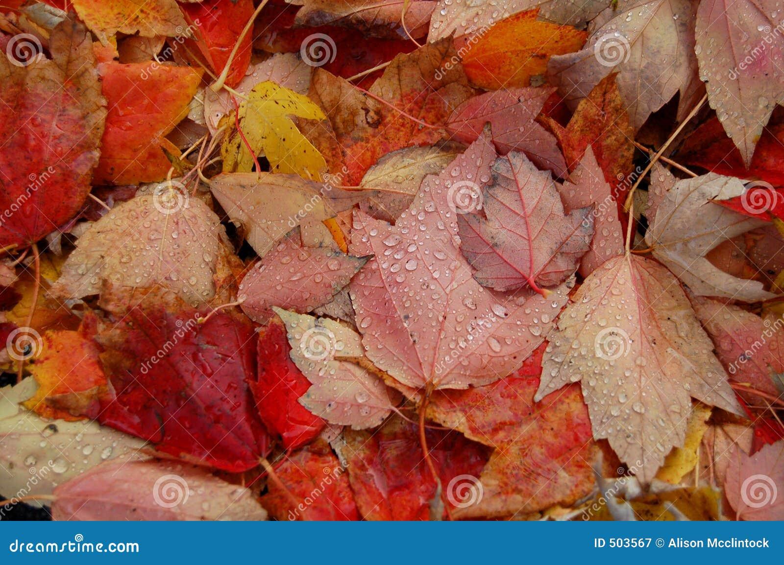 Hösten tappar leavesvatten