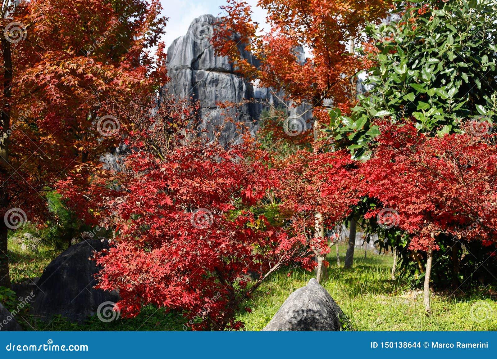 Höstfärger i stenskoglandskapet i Yunnan, Kina