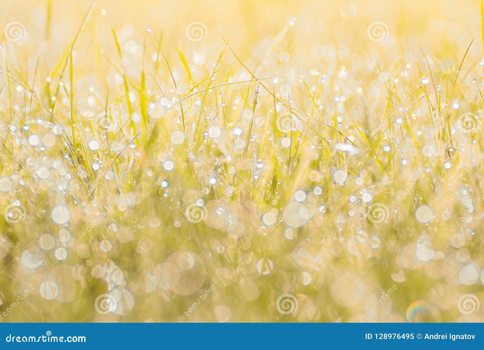 Höstgräs i solnedgångsolljus Suddig bakgrund för grön gul apelsinabstrakt begreppnatur Makro bokeh