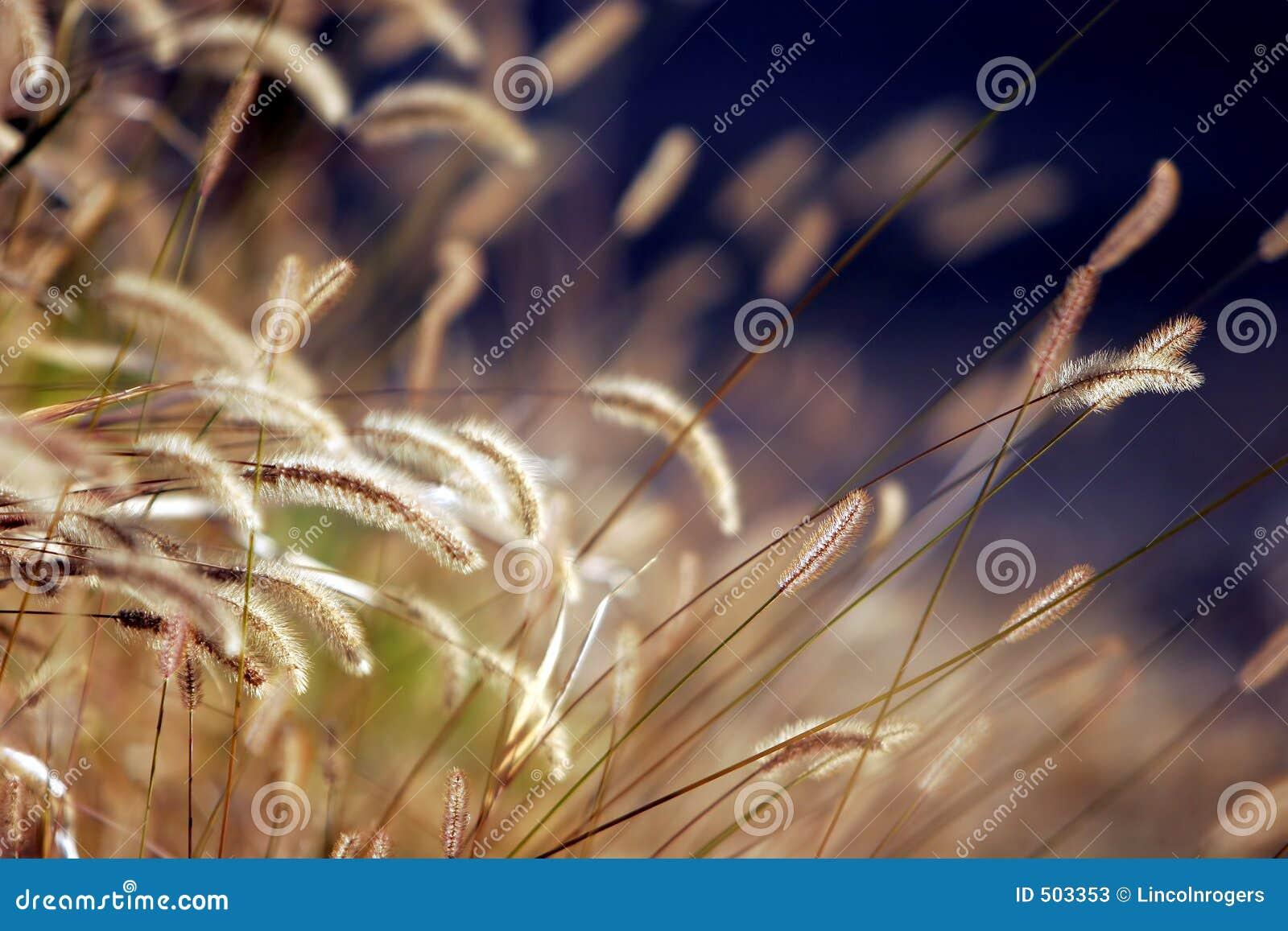 Höstgrässolnedgång