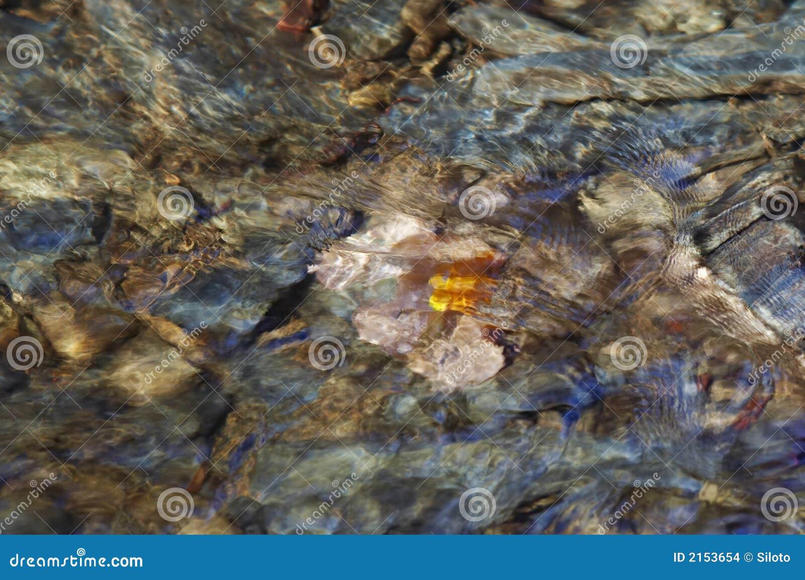 Höstleaf under vatten