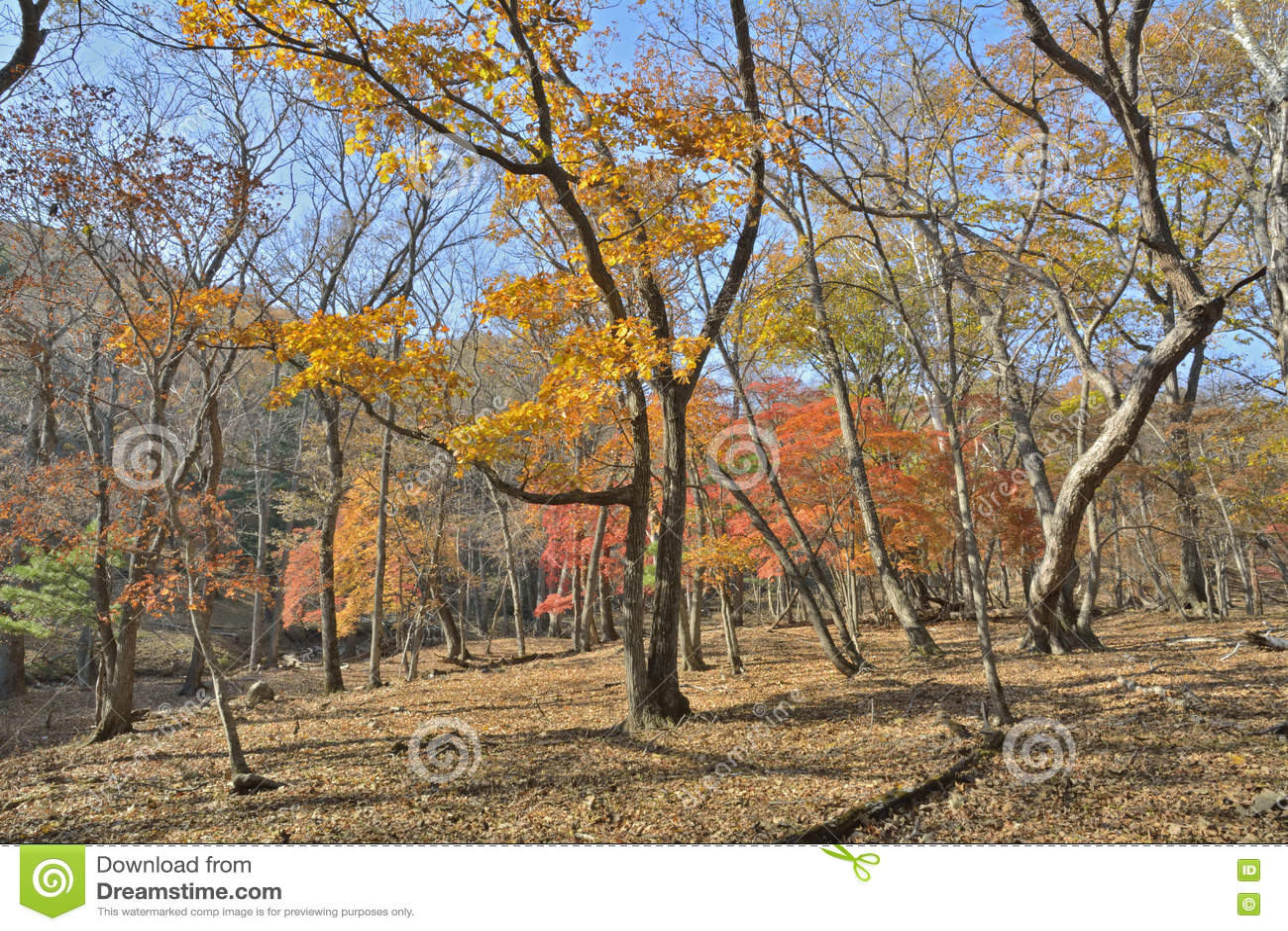 Höstlig skog