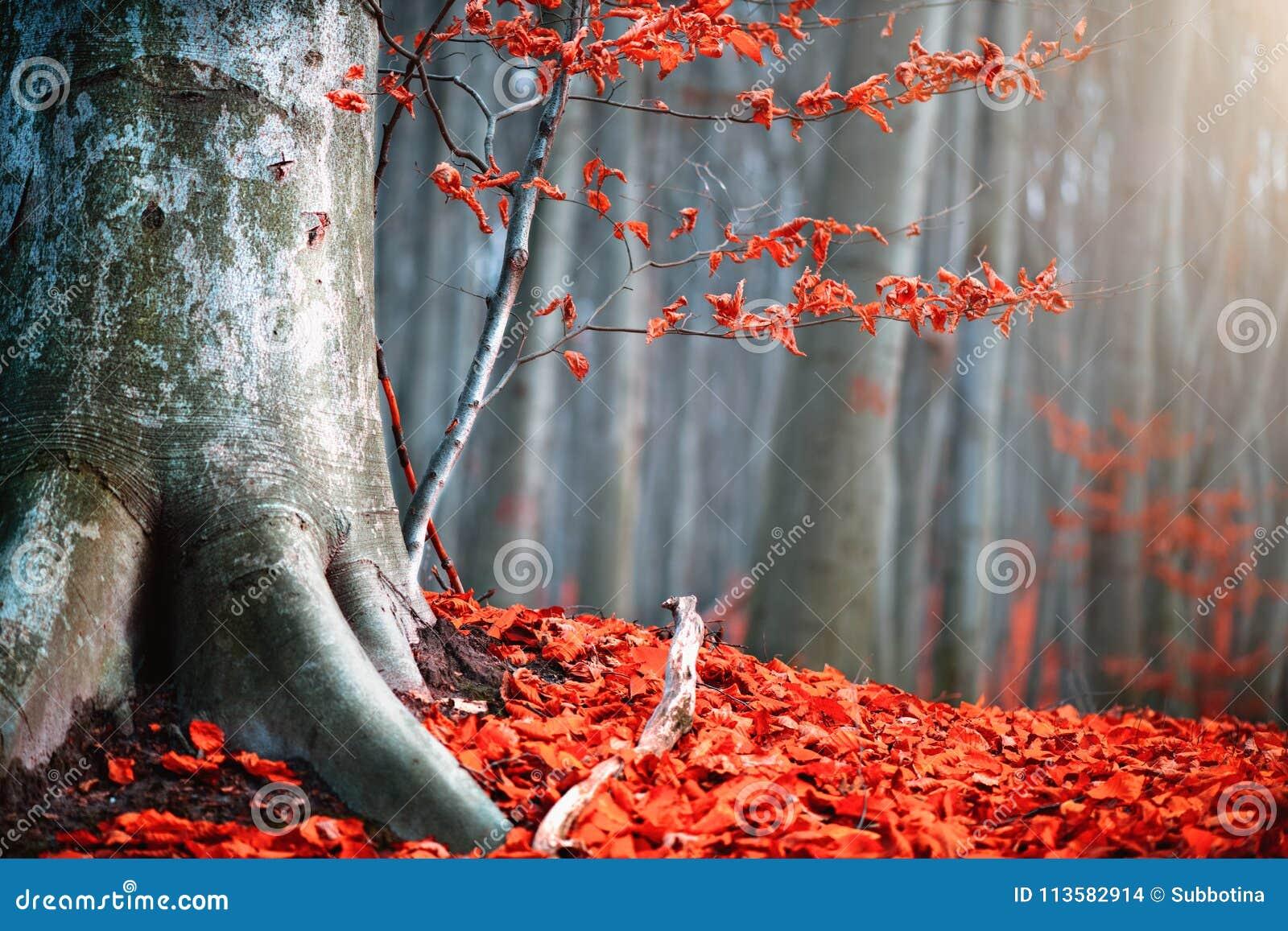 Höstnaturplats Fantasinedgånglandskap Härligt höstligt parkerar med röda sidor och gamla träd
