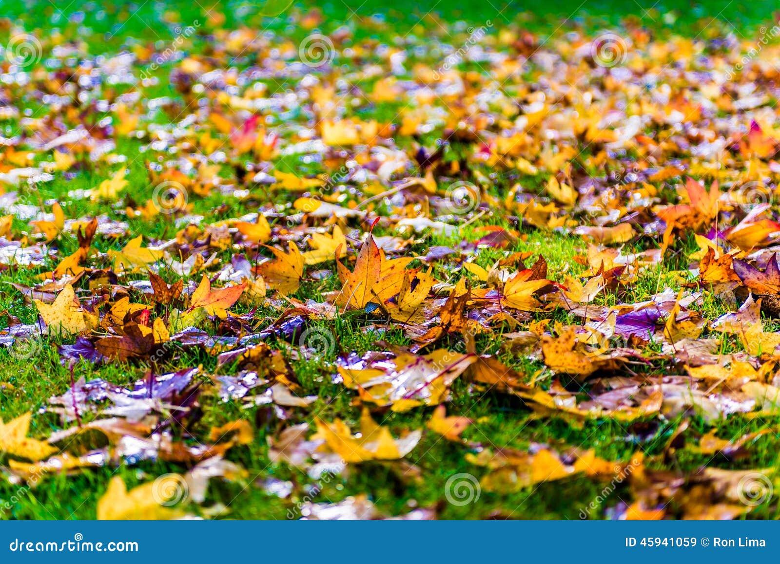 Höstnedgångsidor på gräs