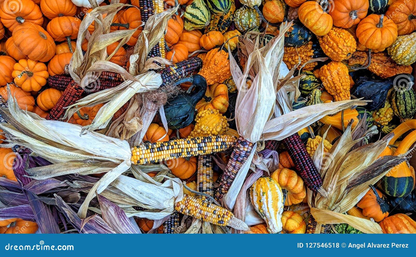 Höstsäsong och dess färgrika frukter och grönsaker