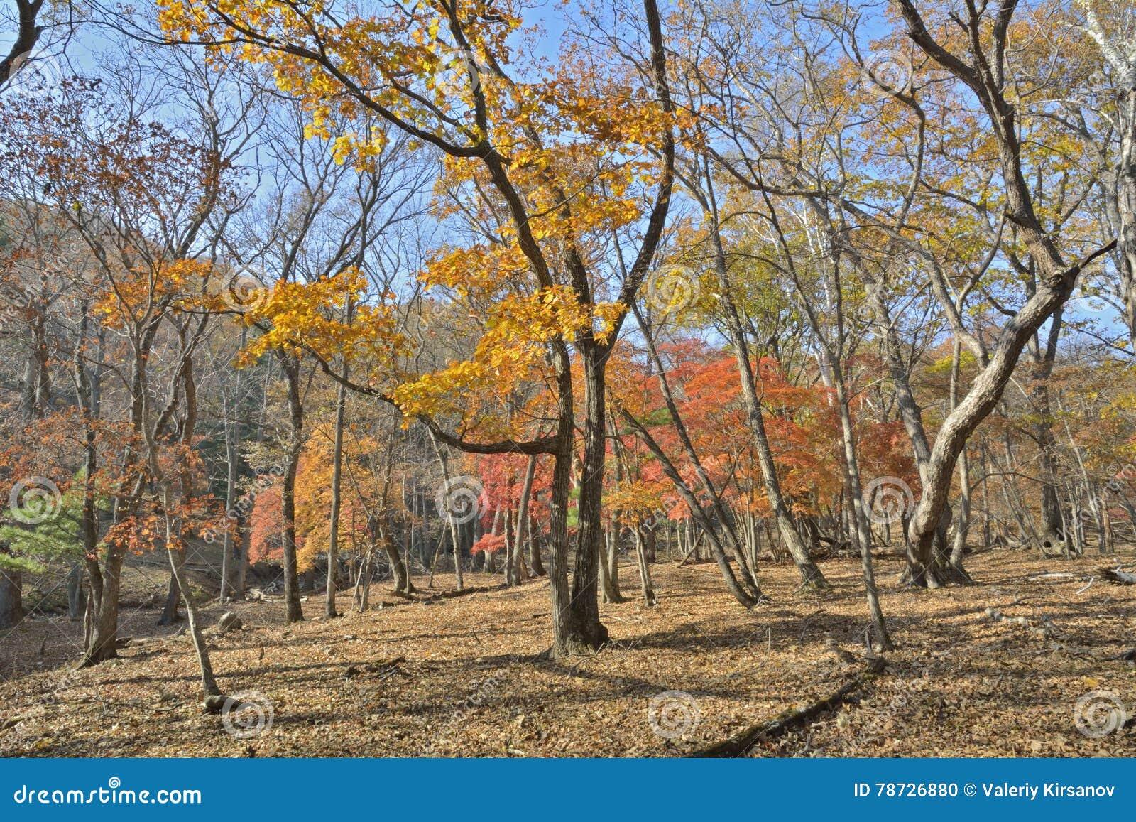 1 höstskog