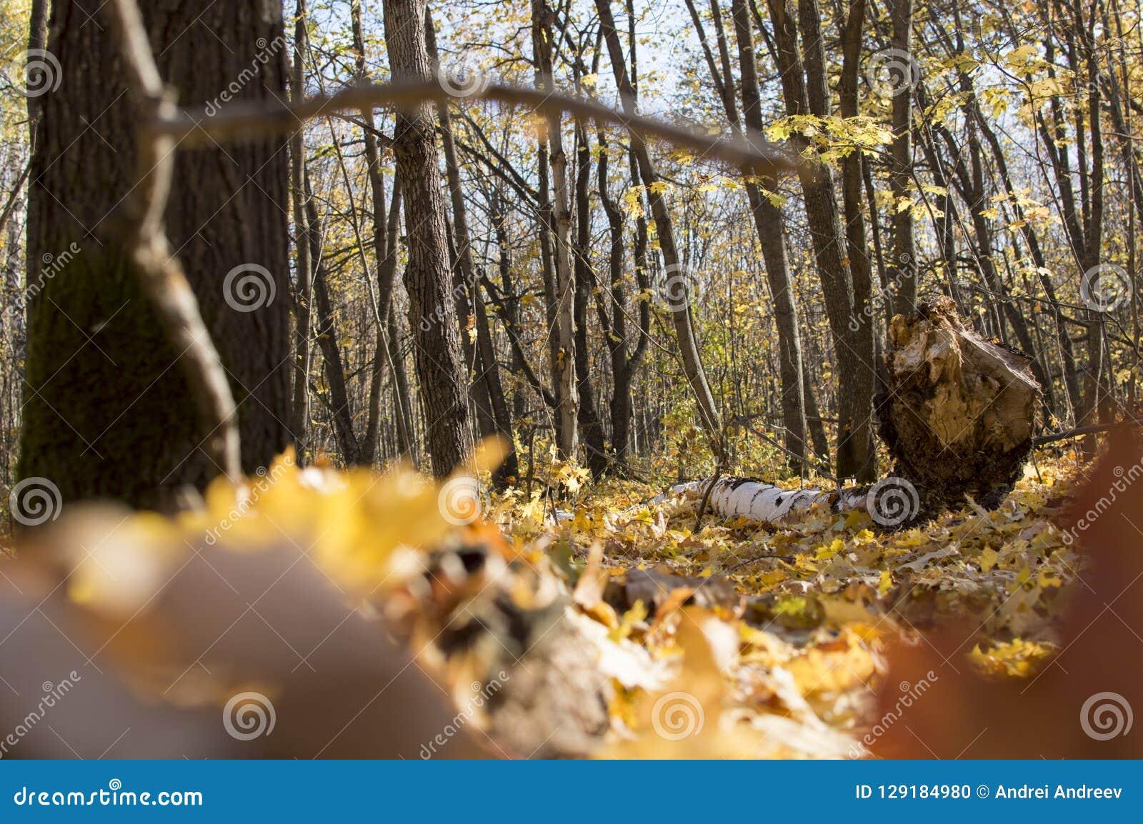 Höstskoglandskap med djup bokeh och reflexion