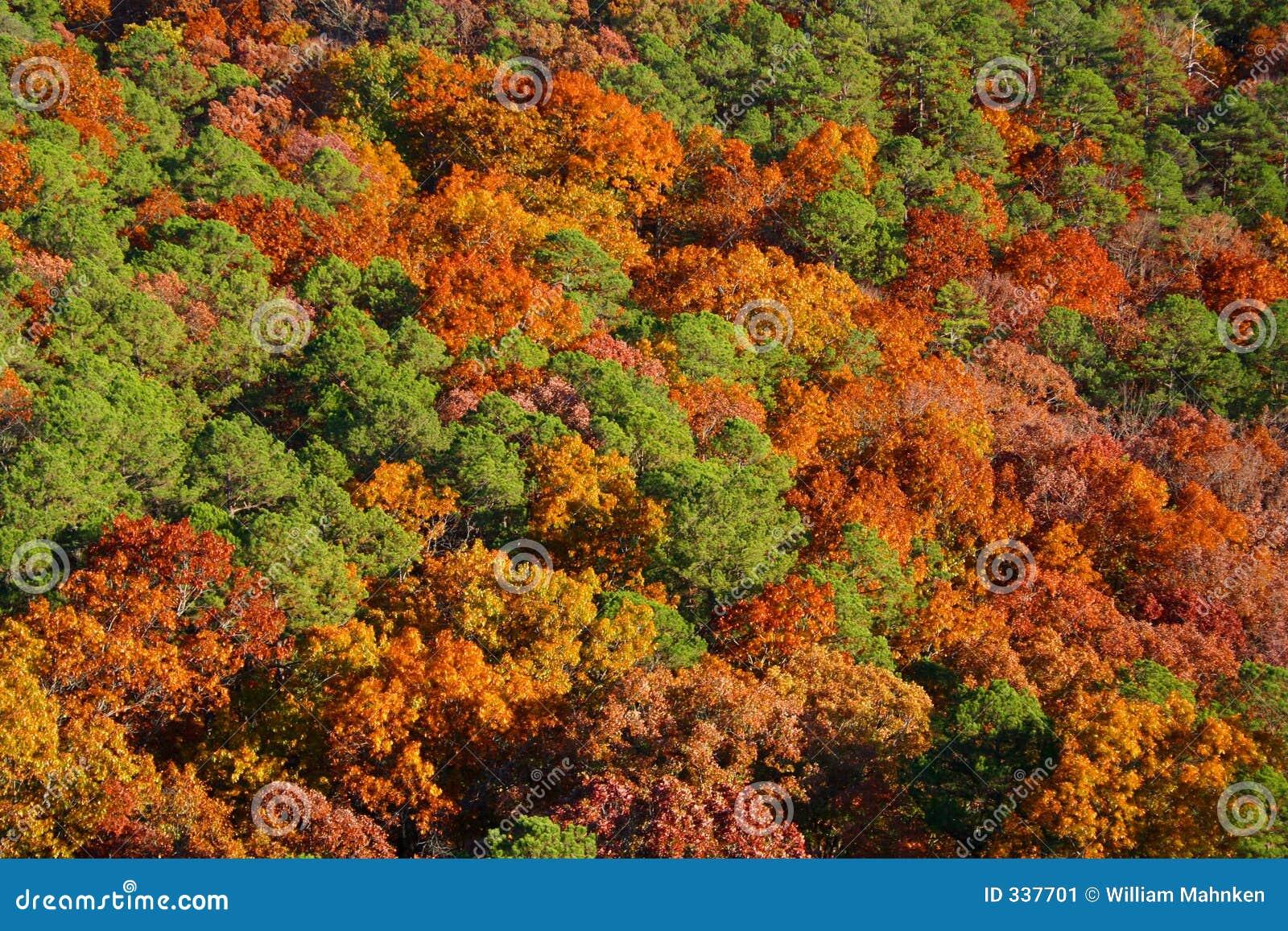 Hösttrees