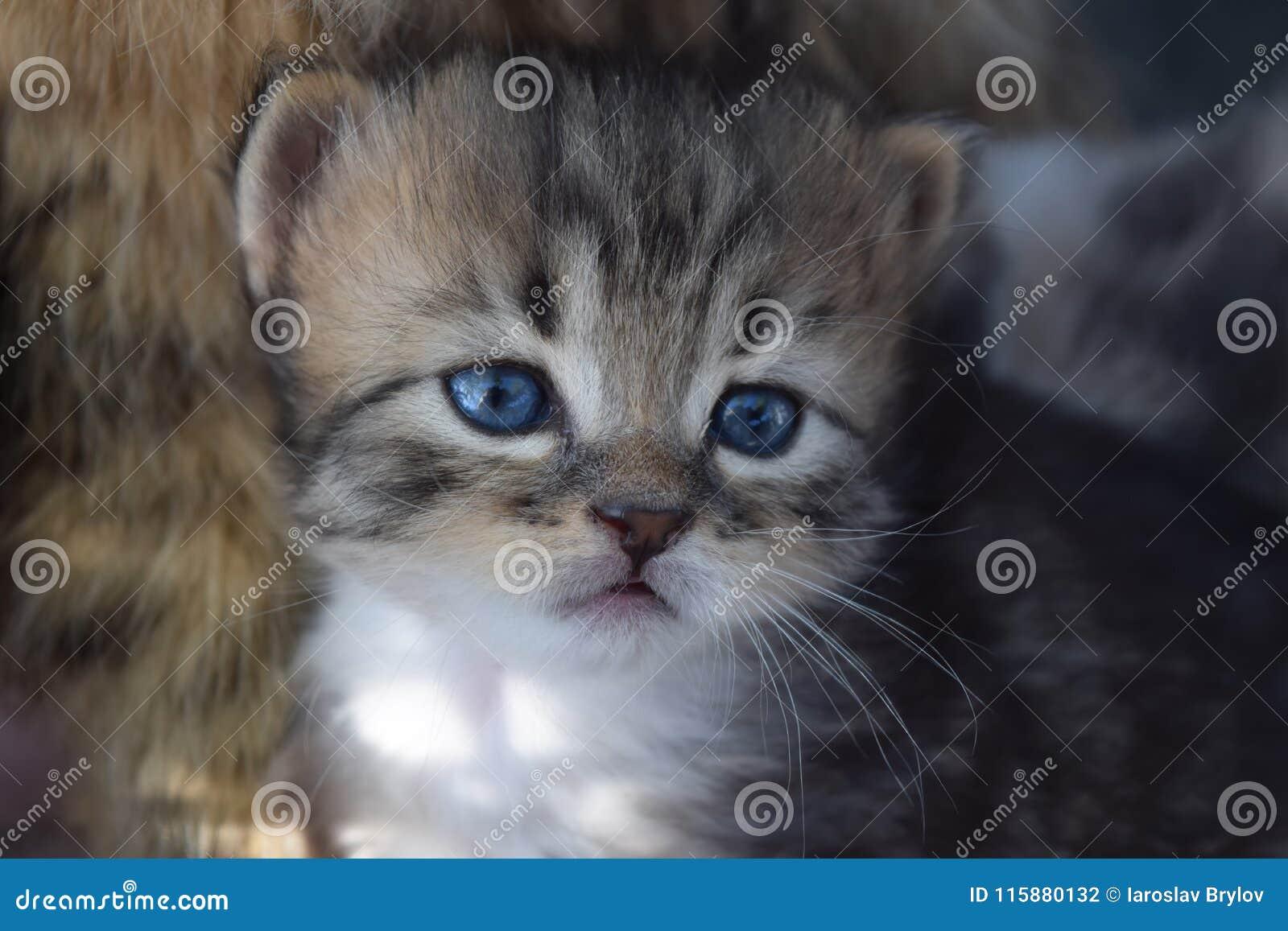 Hübsch ein kleines Kätzchen