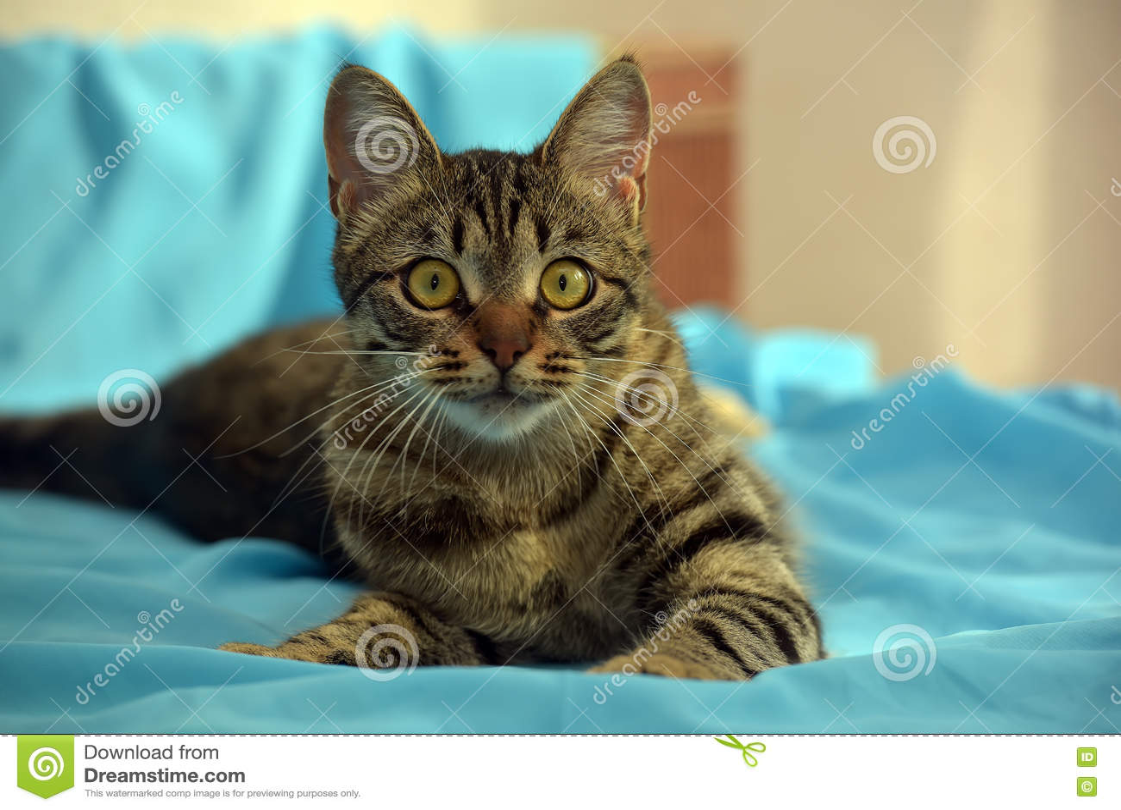 Hübsche junge Katze der getigerten Katze