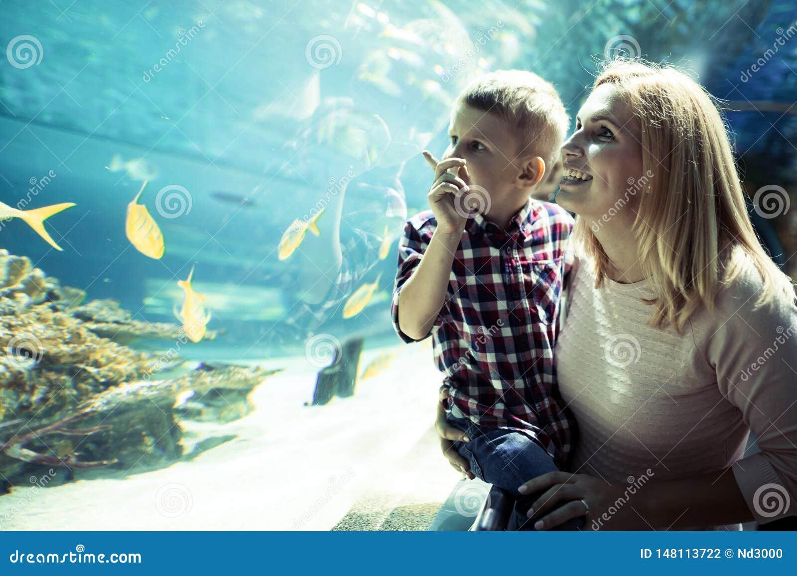 H?llande ?gonen p? havsliv f?r moder och f?r son i oceanarium