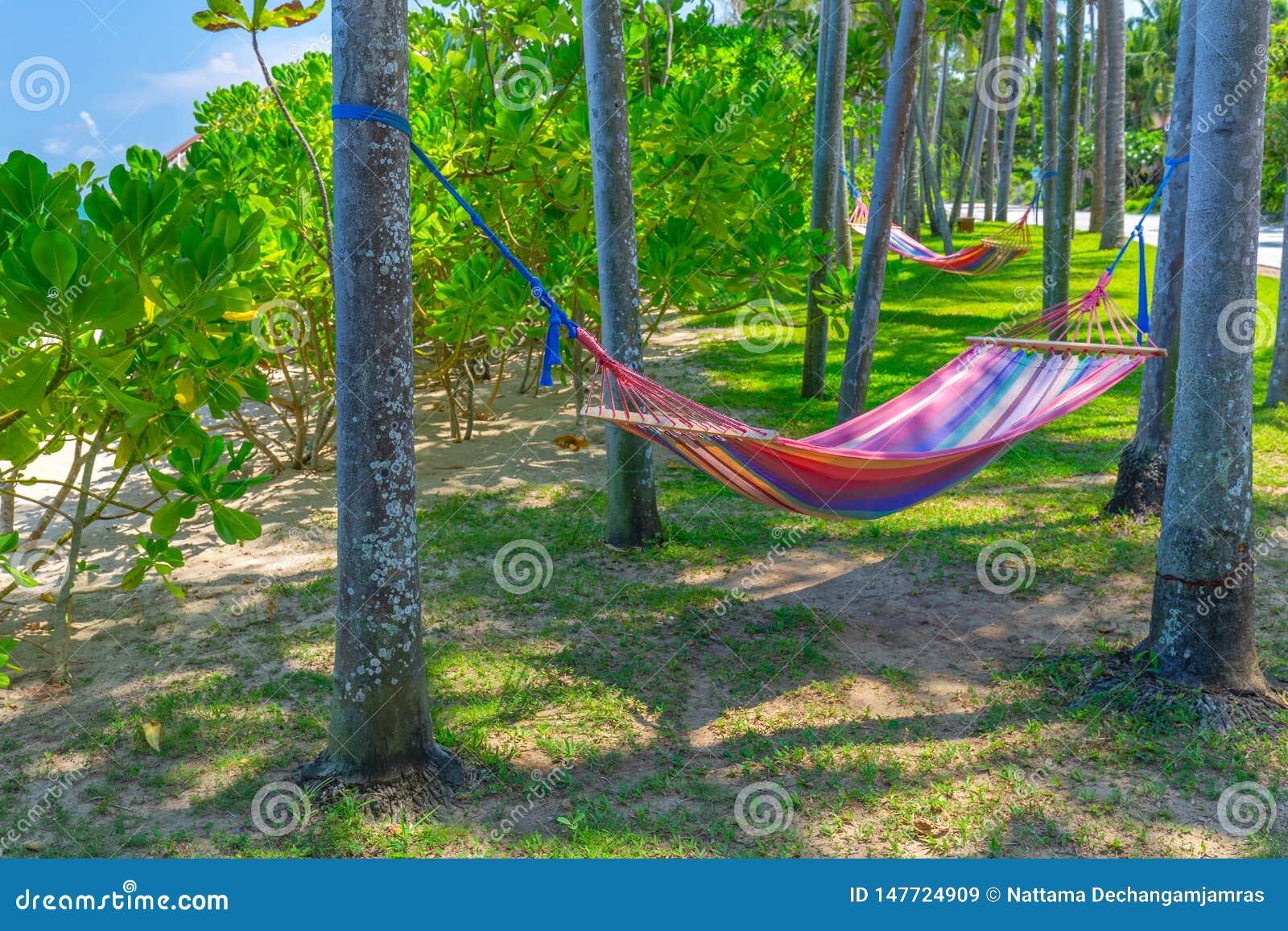 H?ngematte zwischen Palmen auf tropischem Strand Paradies-Insel f?r Feiertage und Entspannung