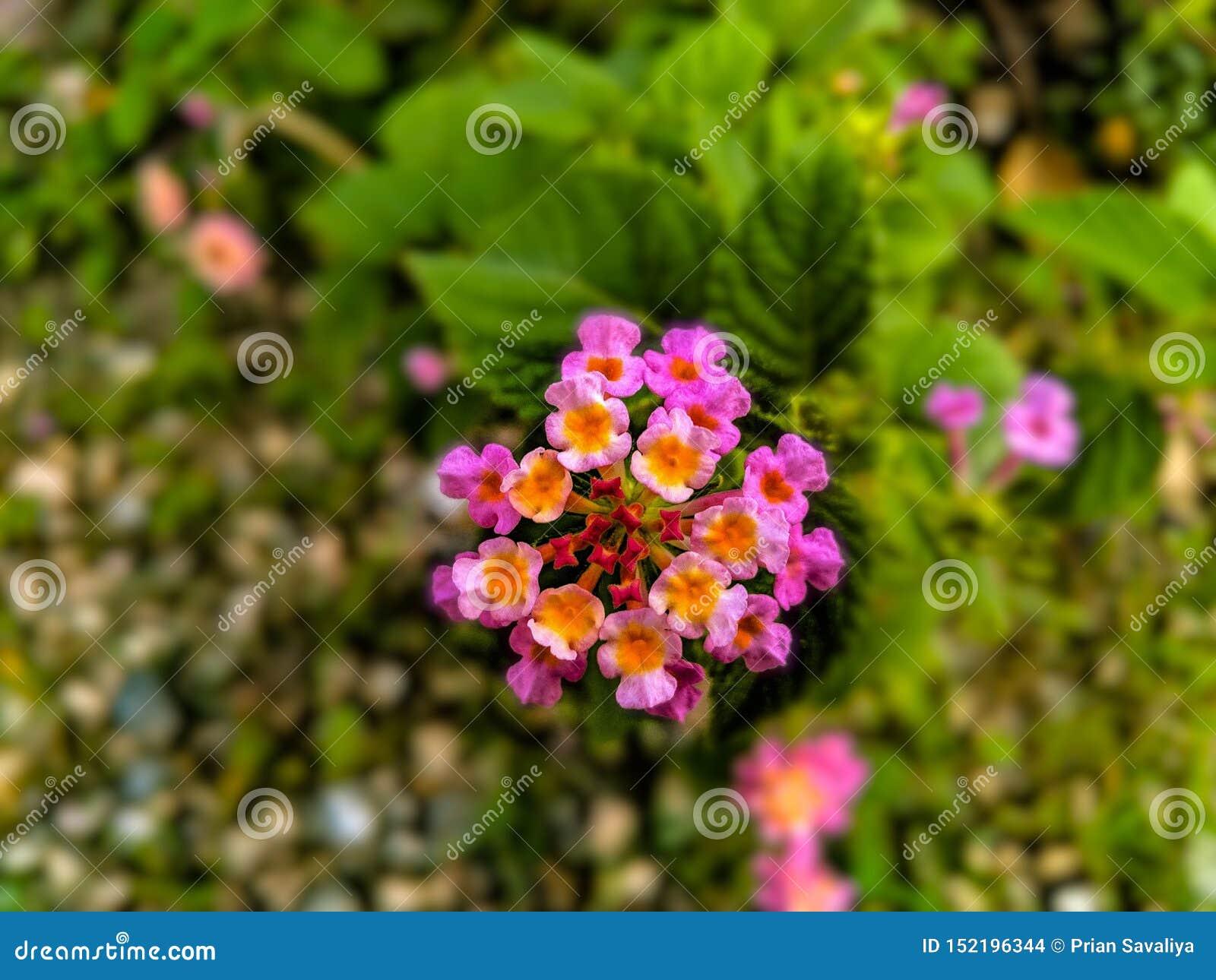 H?rlig blomma